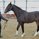 5 Reasons Your Horse Won't Stand