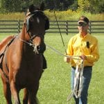Tips for Returning Your Horse to Work