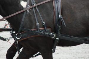Poor harness fit can cause bucking
